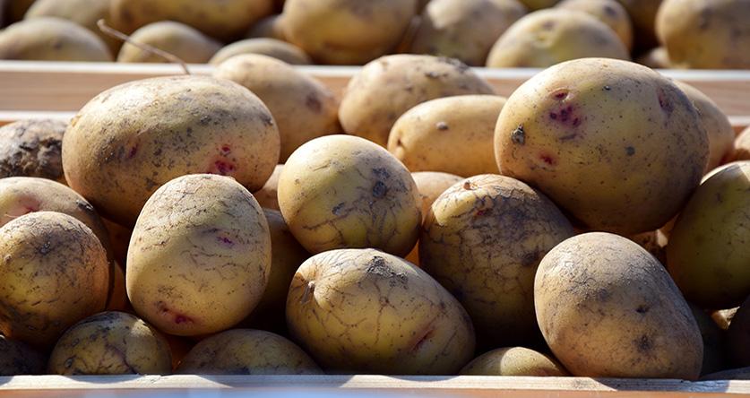 Comment conserver correctement les pommes de terre